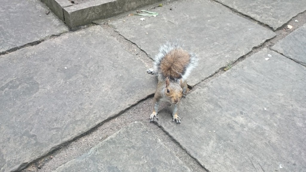 squirrel-in-bonhill-fields