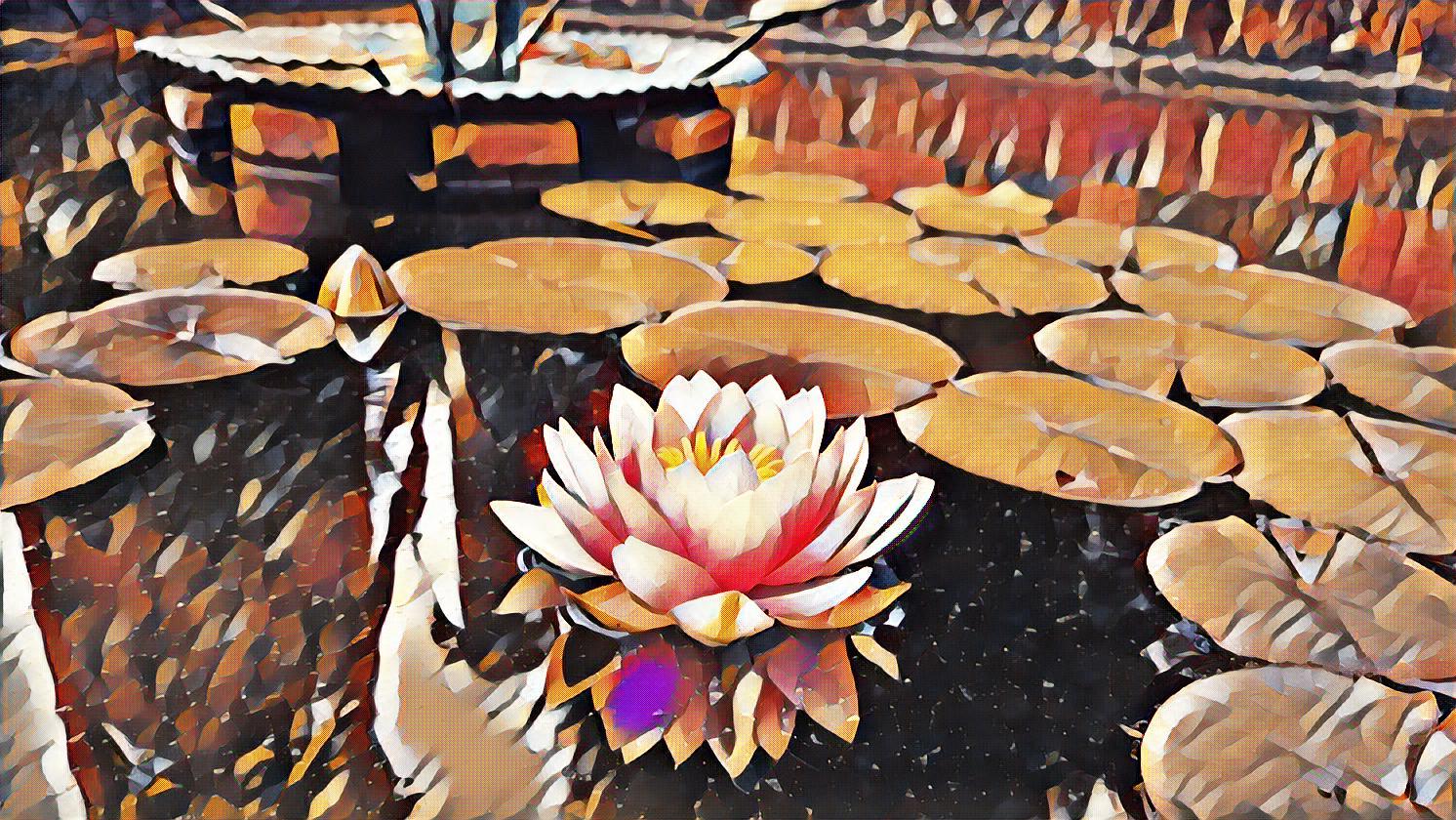 lotus-full
