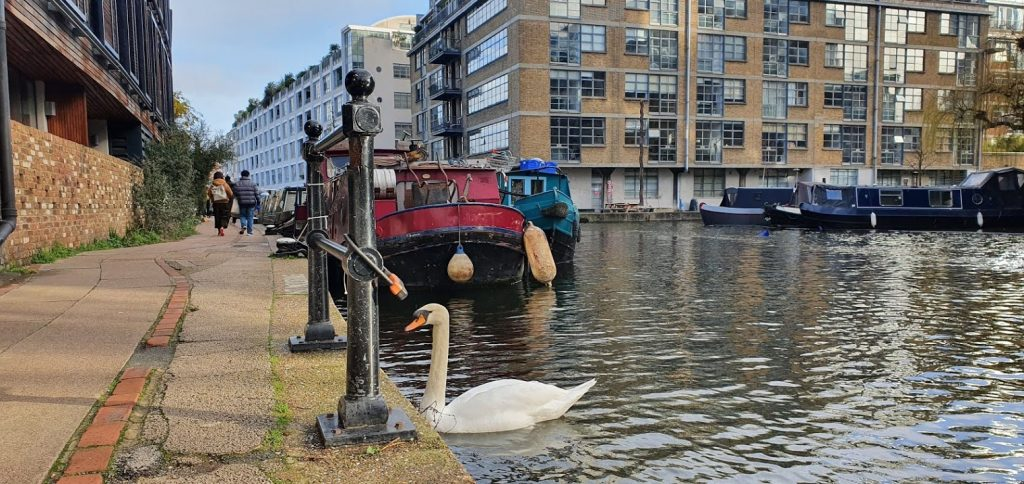 Swan on the Canal at Hackney